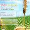 Grani duri siciliani: un incontro a Caltagirone per riscoprirli e un seminario per decidere il futuro dell'agricoltura in Europa