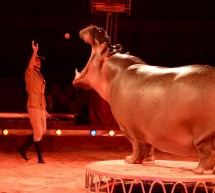Royal Circus incontra i Catanesi
