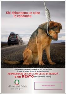 ad_acireale_si_promuove_l_adozione_dei_cani_abbandonati