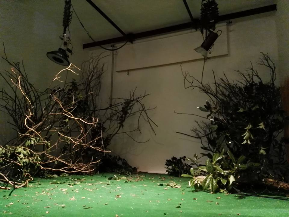 """Inizio dell'allestimento di """"bosco in atelier""""."""